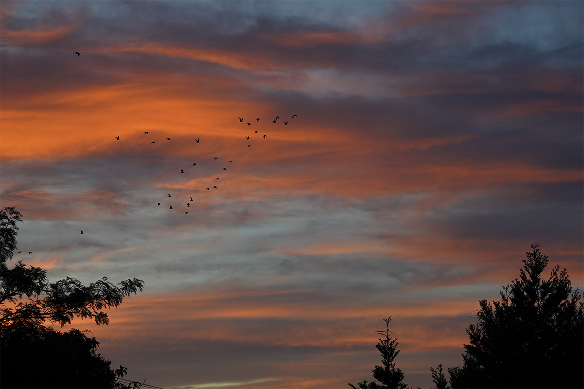 Birds_Morning_Sunrise_Auckland1